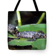 A Baby Alligator Resting On A Lilly Pad Tote Bag