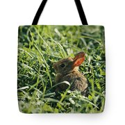 A Baby Cottontail Rabbit Sits Among Tote Bag