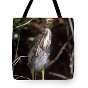 A Baby Green Heron Stretched Out Peering Into The Camera Tote Bag