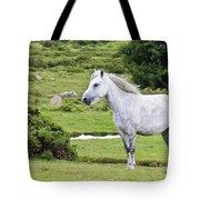 A Beautiful White Dartmoor Pony, Devon, England Tote Bag