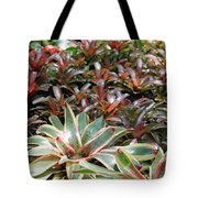 A Bevy Of Bromeliads Tote Bag