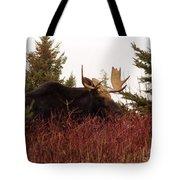 A Big Fierce-eyed Bull Moose Tote Bag