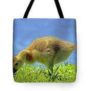 A Bite To Eat Tote Bag