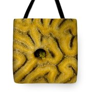 A Blenny In Brain Coral Tote Bag