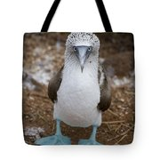 A Blue Footed Booby Looks At The Camera Tote Bag