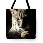 A Bobcat Sitting In A Ray Of Sun Tote Bag