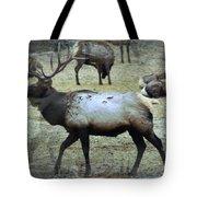 A Bull Elk  Tote Bag