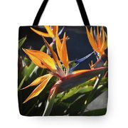 A Bunch Of Bird Of Paradise Flowers Bloomed  Tote Bag