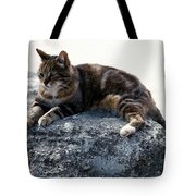 A Cat From Rome Tote Bag