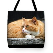 A Cat Named 'kitty' Tote Bag