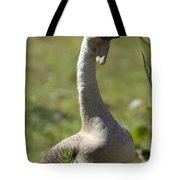 A Chinese Goose Anser Cygnoides At Zoo Tote Bag