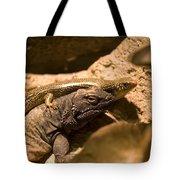 A Chuckwalla Lizard And A Skink Tote Bag