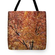 A Claret Ash Tree In Its Autumn Colors Tote Bag