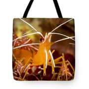 A Cleaner Shrimp Perches On An Exposed Tote Bag