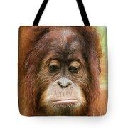 A Close Portrait Of A Sad Young Orangutan Tote Bag