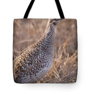 A Close-up Of A Sharptail Grouse Tote Bag