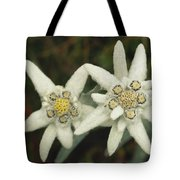 A Close View Of An Edelweiss Flower Tote Bag