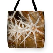 A Closeup View Of Coral Polyps Tote Bag