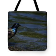 A Common Grackle Tote Bag