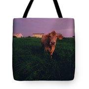 A Cow Walks Near Beachhouses Tote Bag