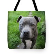 A Cute Dog Outdoors Tote Bag