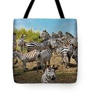 A Dazzle Of Zebras Tote Bag