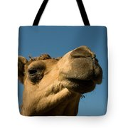 A Dromedary Camel At The Lincoln Tote Bag