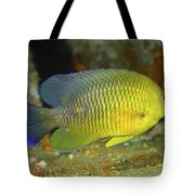 A Dusky Damselfish Offshore From Panama Tote Bag by Michael Wood