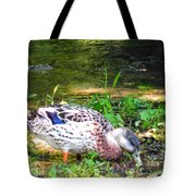 A Female Mallard Duck Is See Searching For Food 1 Tote Bag