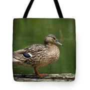 A Female Mallard Standing On A Piece Of Wood Tote Bag