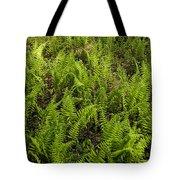 A Field Of Ferns Tote Bag
