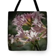 Peppermint Surprise Lily - A Floral Abstract Tote Bag