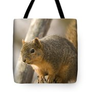 A Fox Squirrel Sciurus Niger Perches Tote Bag