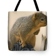 A Fox Squirrel Sciurus Niger Sits Tote Bag