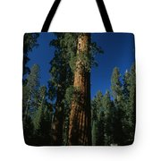 A Giant Sequoia Tree Towers Tote Bag