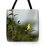 A Goldfinch In A Pear Tree Tote Bag