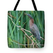 A Green Heron By The Canal Tote Bag