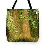 A Group Giant Redwood Trees In Muir Woods,california. Tote Bag