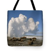A Group Of American Bison Rest Tote Bag
