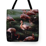 A Group Of Flamingos At The Folsom Tote Bag