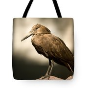 A Hammerkop At The Lincoln Childrens Tote Bag