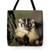 A Hand-raised Badger At The Home Tote Bag