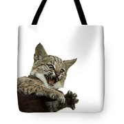A Hand-raised Bobcat Reacts As Its Held Tote Bag