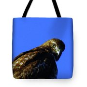 A Hawk Looking Back  Tote Bag
