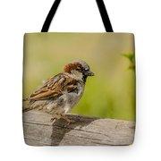 A House Sparrow Tote Bag
