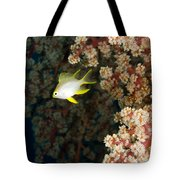 A Juvenile Golden Damsel Fish Shelters Tote Bag