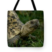 A Leopard Tortoise At The Lincoln Tote Bag