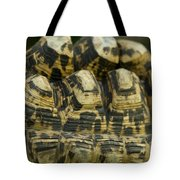 A Leopard Tortoise On The Move Tote Bag