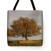 A Little To The Left Tote Bag