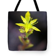 A Little Yellow Star  Tote Bag